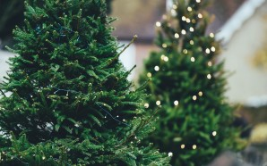 No live Christmas trees from Ikea this year